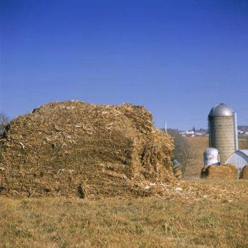 Biomasa agrícola y forestal